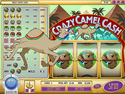 Crazy Camel Cash Slot Screenshot