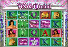 The White Orchid Slot Screenshot